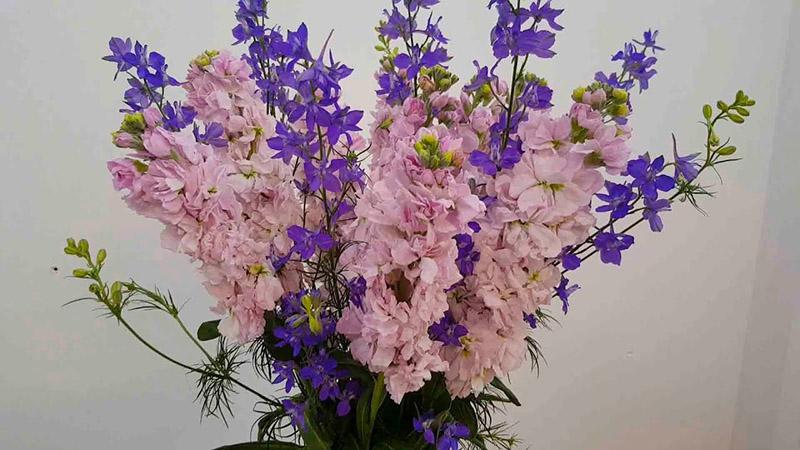 Hoa phi yến hồng tượng trưng cho sự lãng mạn